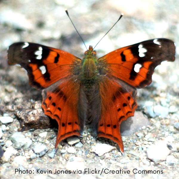 Photo of butterfly no. 1
