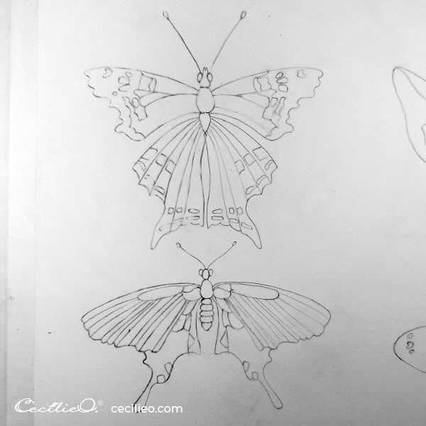 The complete butterfly.