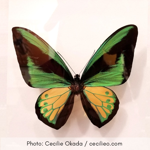 Photo of green butterfly