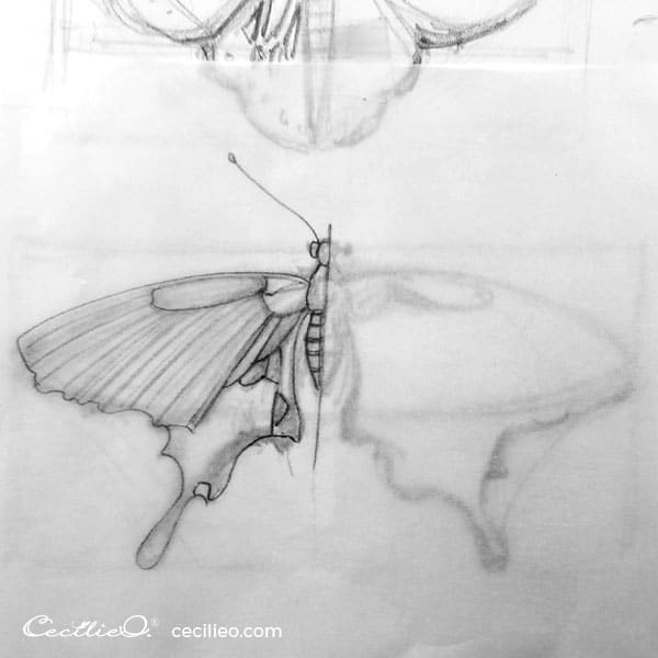 Sketching the swallowtail buttterfly