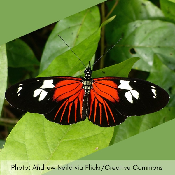 Photo of red butterfly