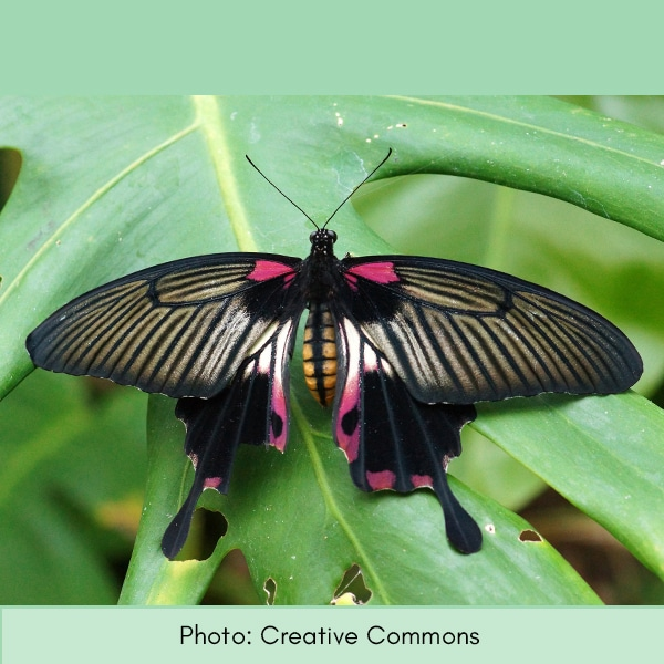 Photo of swallowtail butterfly