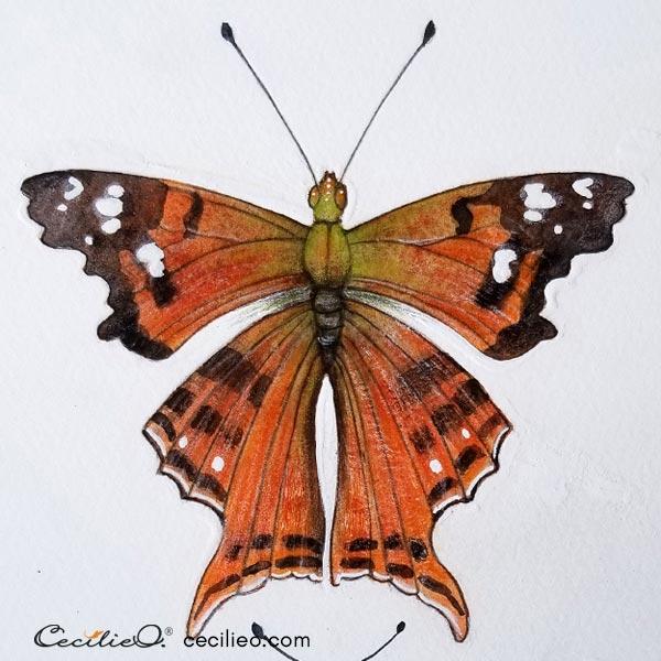 Butterfly watercolor.