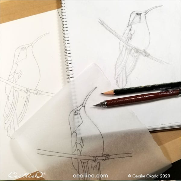 Sketching the hummingbird.