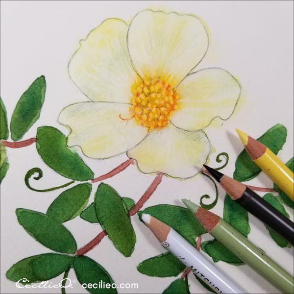 Colored pencils for the petals