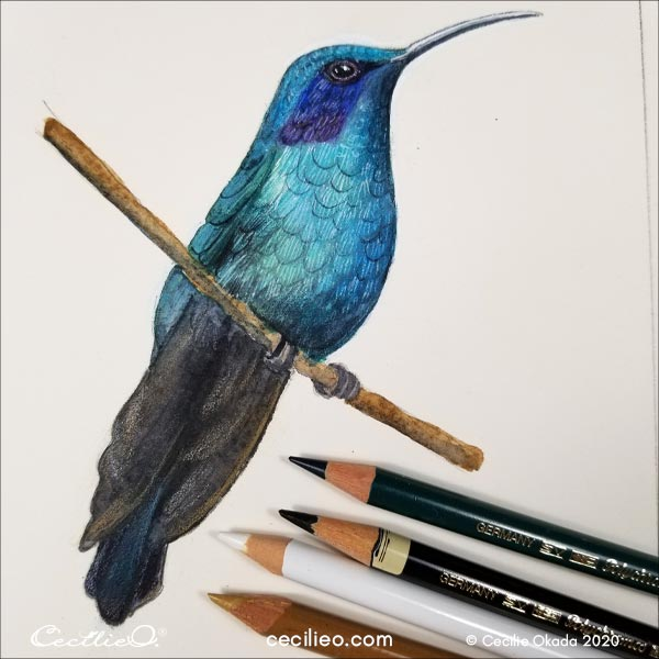 Colored pencils for the tail and folded wings.