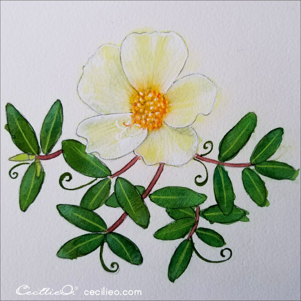 Yellow wild rose all done- watercolor and colored pencils