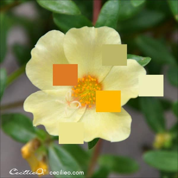 Photo of yellow wild rose with color palette