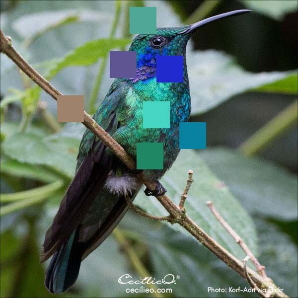 Photo of a hummingbird with a color palette.