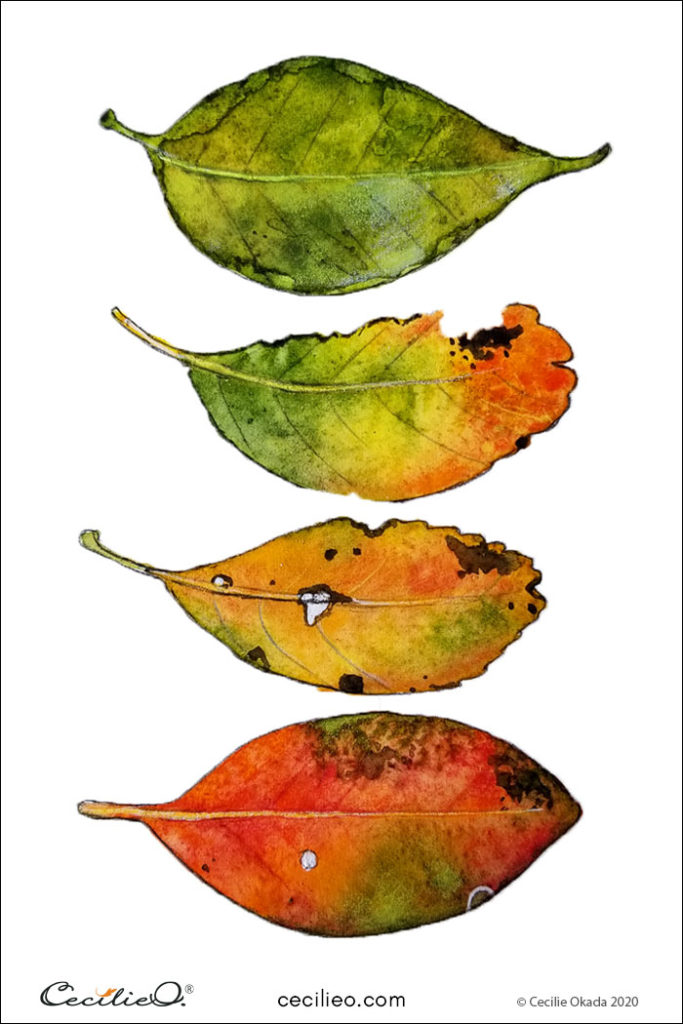Completed watercolor & colored pencils painting with four colorful fall leaves.