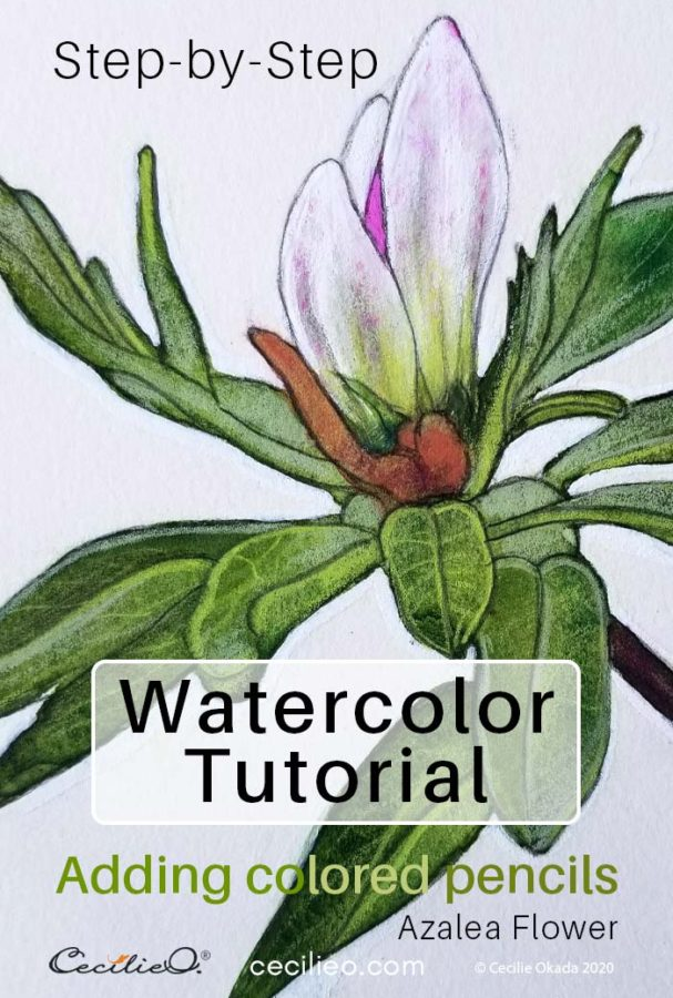 How to watercolor a humble azalea flower bud.