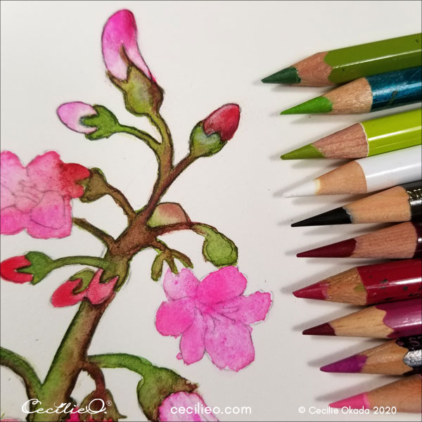 Refining the details with an assortment of pink, red and green colored pencils.
