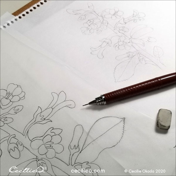 My drawing of the flower, with tracing of the enlarged printout.