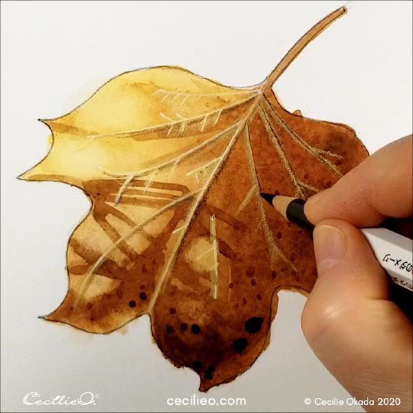 Drawing light and shadow on the leaf veins with colored pencils.