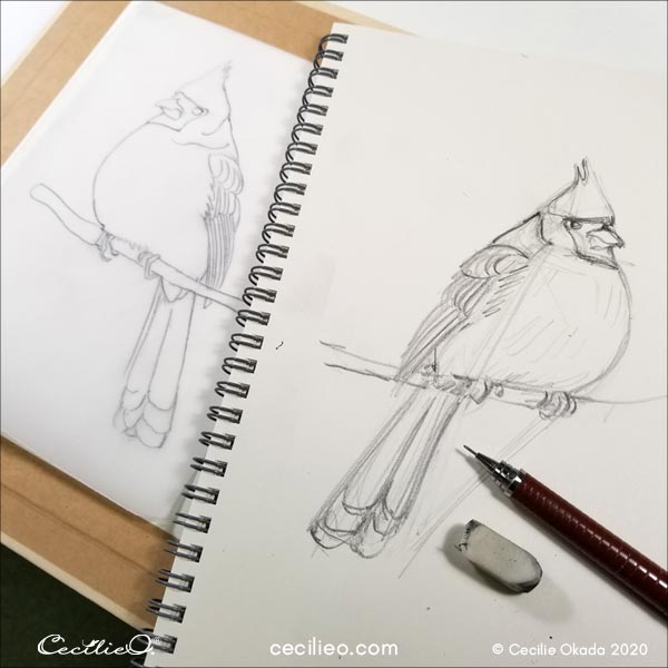 Sketching the cardinal and transferring onto watercolor paper.