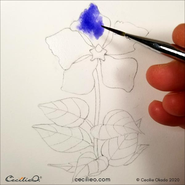 The periwinkle flower drawing.