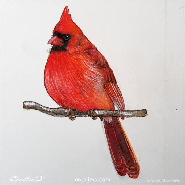 The drawing of the cardinal bird is completed.