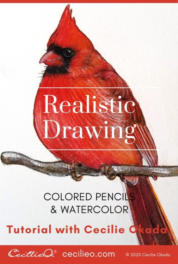 Drawing with Colored Pencils: Realistic Cardinal Tutorial