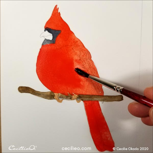 Watercolor the red parts of the bird.