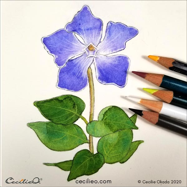 Touching up the plant in various places with colored pencils.