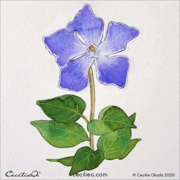 The blue periwinkle flower is done.