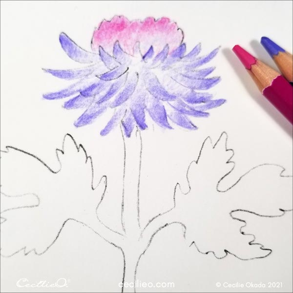 Testing watercolor pencils on a flower drawing.