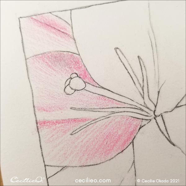 Drawing on the petals with pink color.