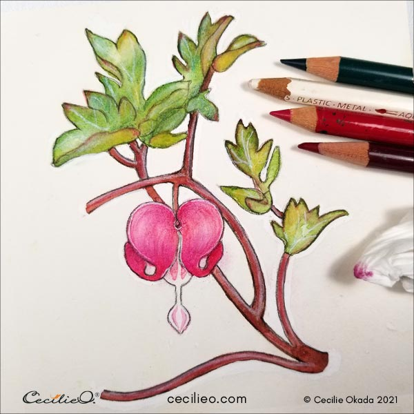 Drawing the highlights and shadows on the flower with colored pencils.