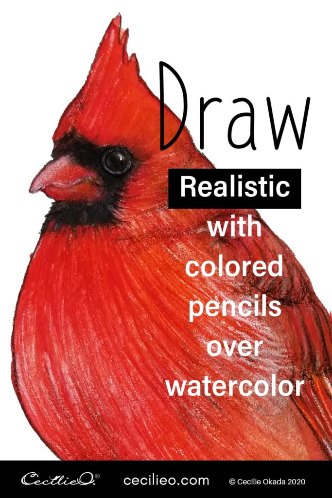Tutorial on how to draw a red cardinal in stunning detail with colored pencils, on a watercolor base. Free outline to download.