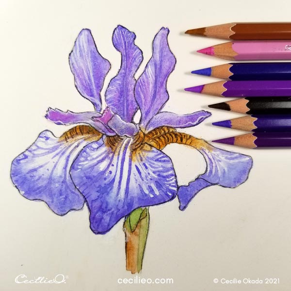 Draw details on the petals with watercolor pencils.