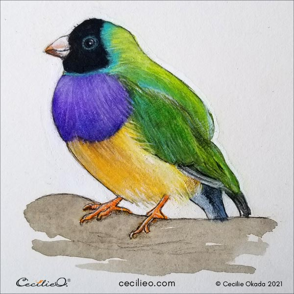 The completed watercolor and colored pencils picture of a colorful finch.