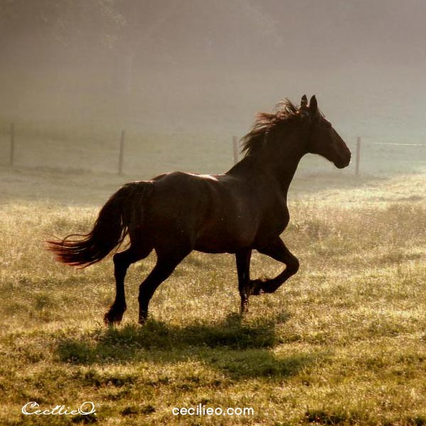 Running horse photo by Photophilde.