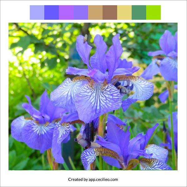 Iris photo with color palette.