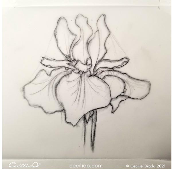 Tracing my sketch of the iris flower.