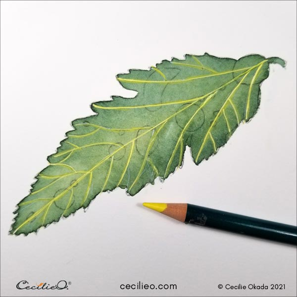 Drawing with colored pencils over the white veins.
