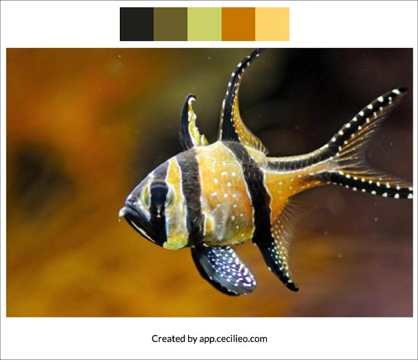 Color palette for fish reference photo.