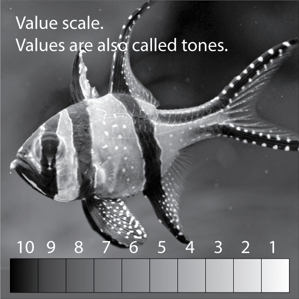 Watercolor value scale on greyscale fish photo.