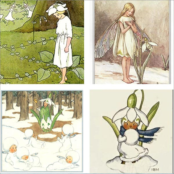 Vintage illustrations with snowdrop.