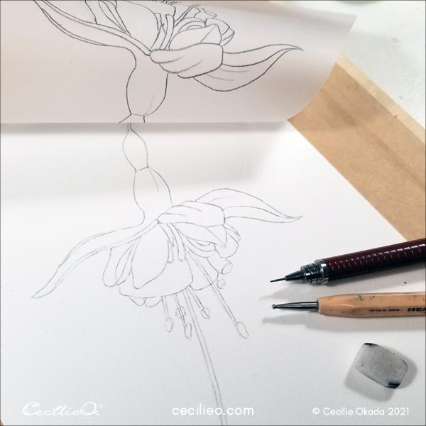 Outline of the flower.