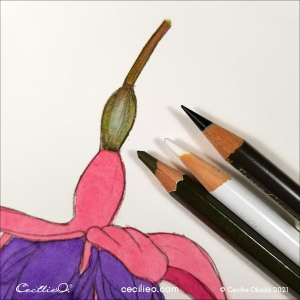 Drawing 3D effects on the stem with colored pencils.