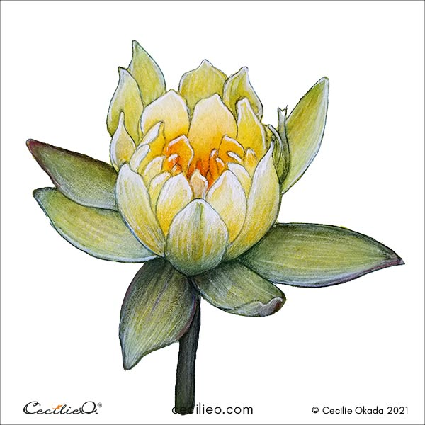 The completed golden watercolor lotus enhanced with colored pencils.