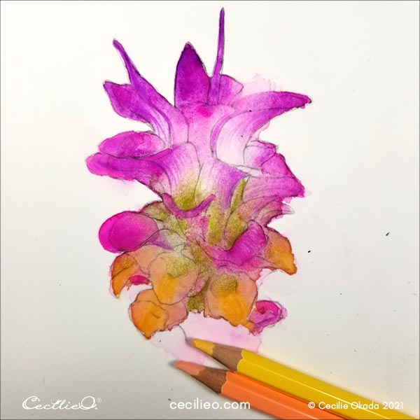 Drawing with watercolor pencils on the yellow petals.