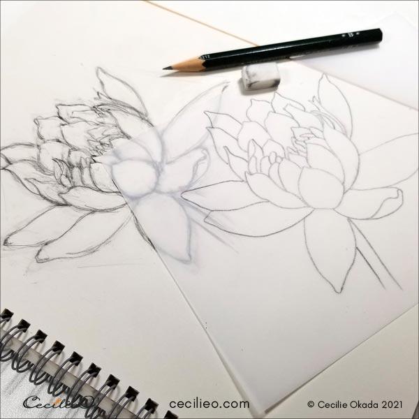 Sketching the lotus flower.