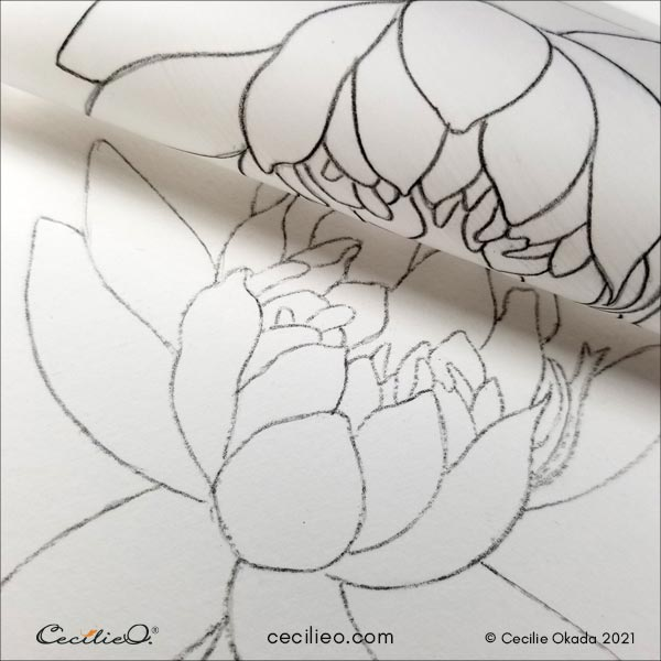 Transferring the lotus flower outline to watercolor paper.