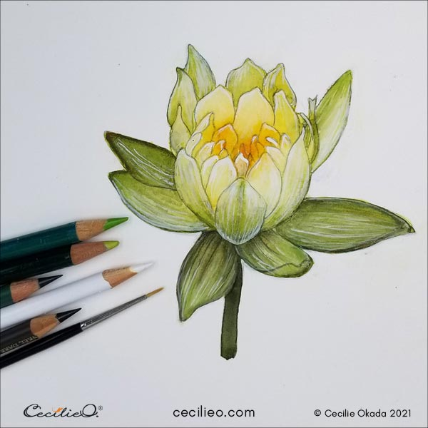 Drawing details on the watercolor painting with colored pencils.