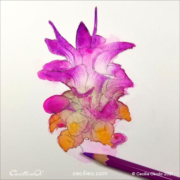 Drawing the pink lines on the petals with a colored pencil.