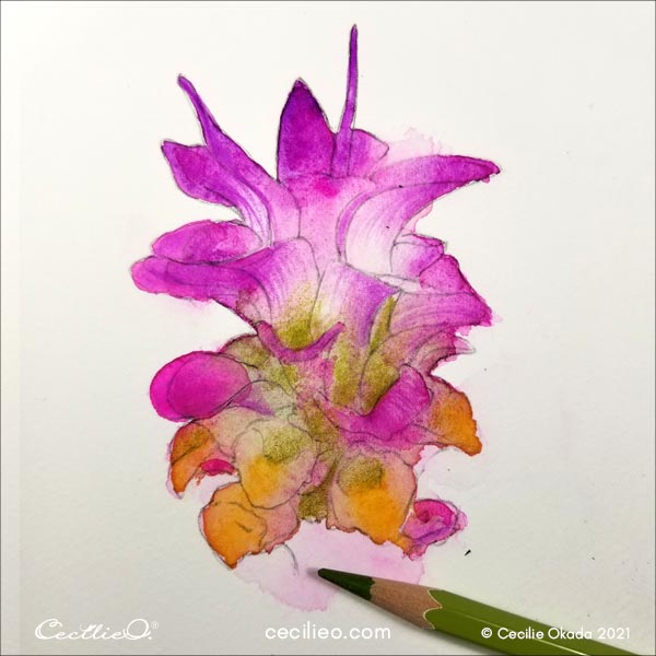 Highlighting the green parts of the flower with a colored pencil.