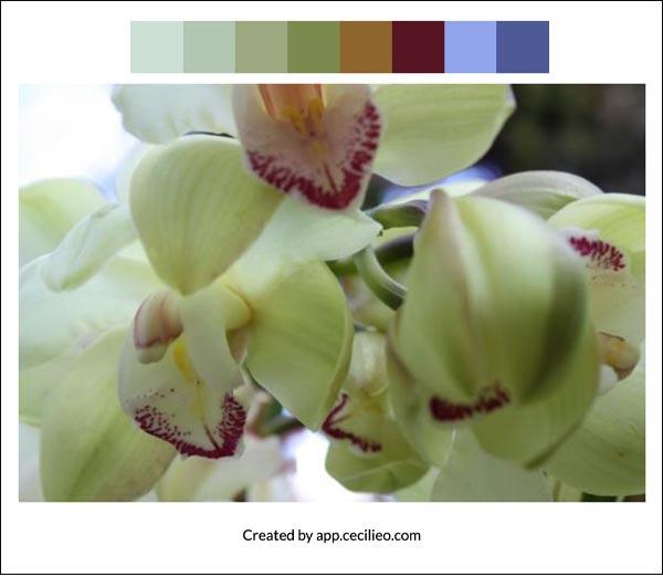 Flower color palette 5