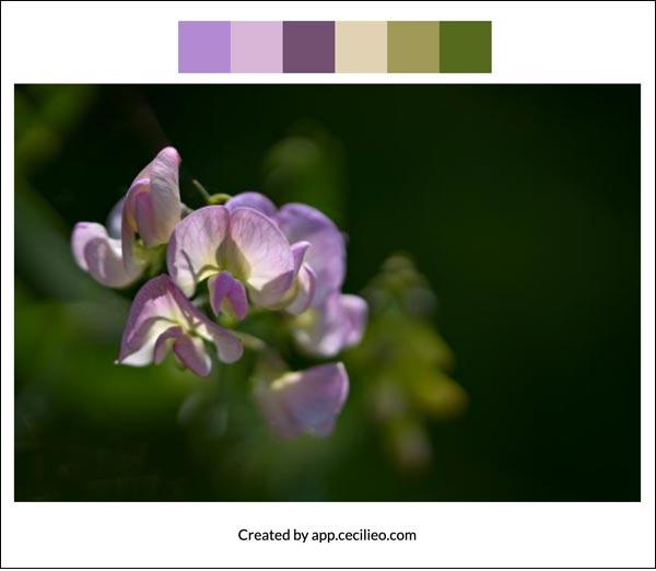 Flower color palette 4