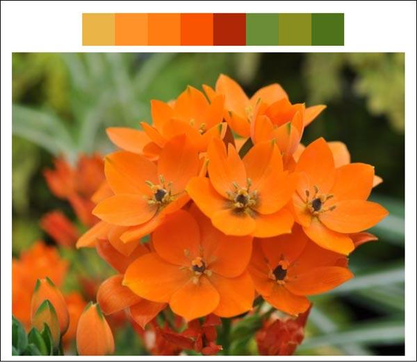 Flower color palette 7